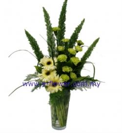 Precious Carnations