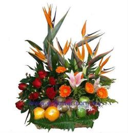 Lovely Fruity